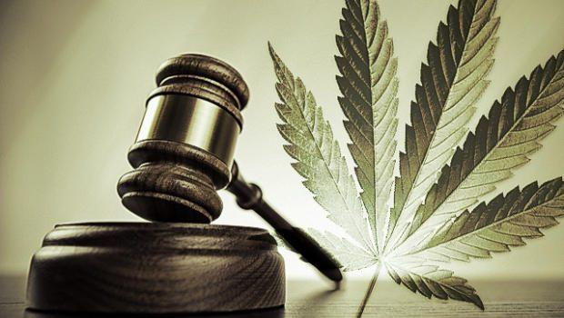 Radiografía de una intervención. Incautaciones de cannabis, atestados policiales, analíticas, juicios…